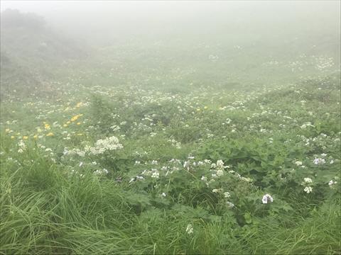 180721-15富良野岳.jpg