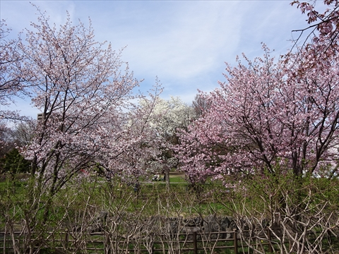190430-03小川公園.jpg