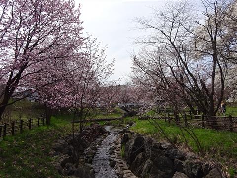 190430-04小川公園.jpg