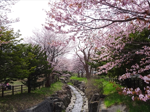 190430-05小川公園.jpg