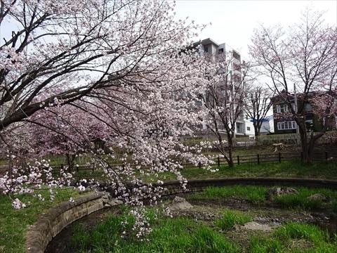 190430-06小川公園.jpg