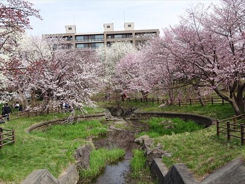 190430-07小川公園.jpg