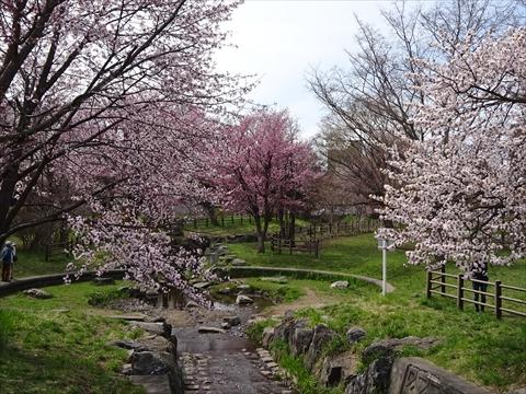 190430-08小川公園.jpg