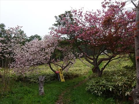 190518-01伊達紋別岳.jpg