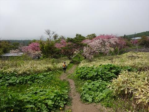 190518-53伊達紋別岳.jpg