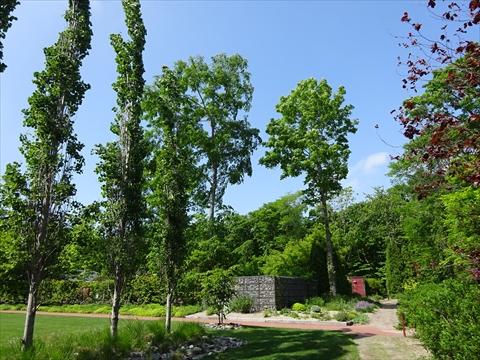 190609-10イコロの森.jpg