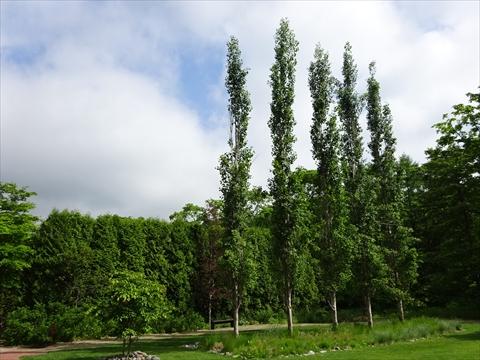 190609-24イコロの森.jpg
