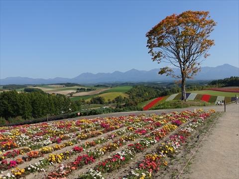 190928-48四季彩の丘.jpg