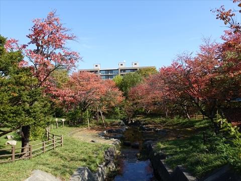 191021-12小川公園.jpg