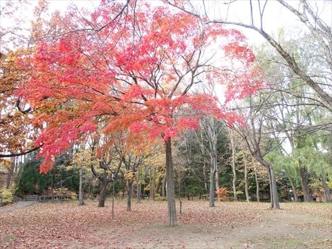 191104-21円山公園.jpg