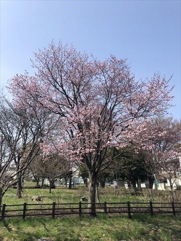 200502-1小川公園.jpg