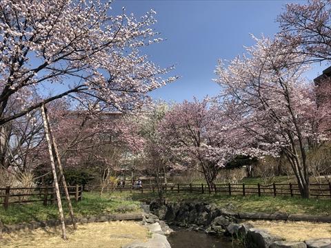 200502-2小川公園.jpg