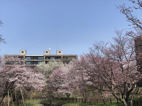 200502-3小川公園.jpg