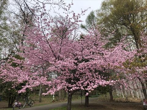 200503-1豊平公園.jpg