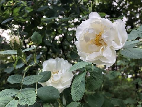 200621-04百合が原公園.jpg