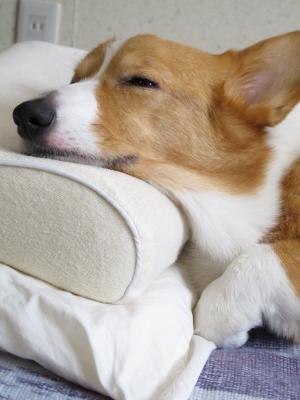 寝るのがいちばんなのだ