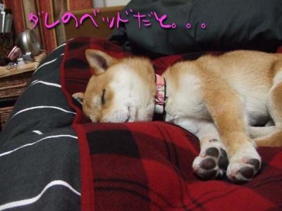 寝やがった。
