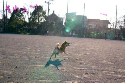 フリスビー投げます。