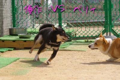 優作vsベリィ FIGHT!