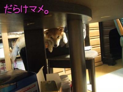 テーブルの下から。