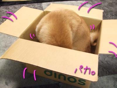 箱の中から。