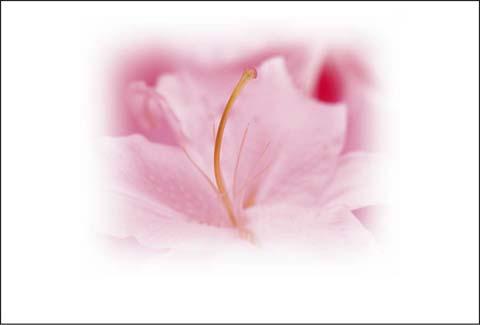 花はがき Q-1