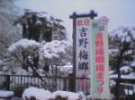 雪の梅祭り
