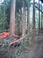 森林伐採1