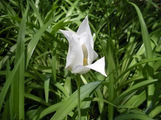 春の花−2011