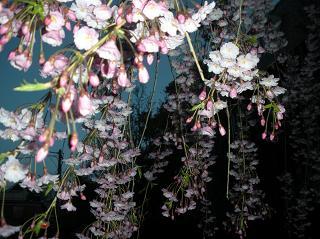 春の花ー2011