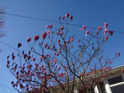 シュロの木