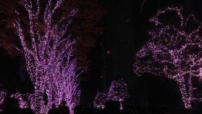 新宿サザンテラス イルミネーション 木