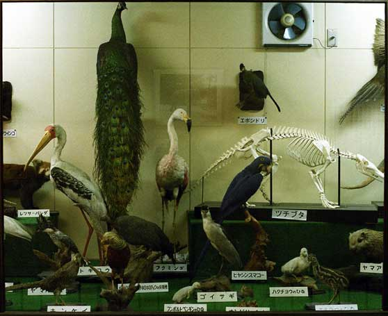 姫路市立動物園の剥製展示室