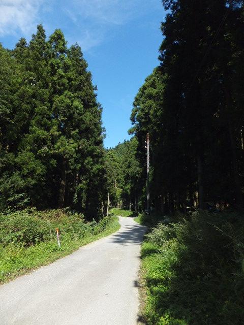 坑道周辺の道