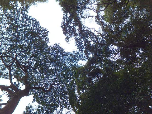 神社の木々