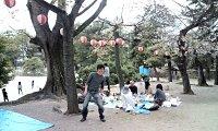 お城の下で花見をする。素晴らしい日本の伝統文化ですね。