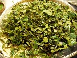 お茶にして飲むときのために枇杷の葉を短冊状に切る