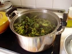 枇杷の葉を蒸し上げてお茶にする