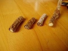 コンシンネの挿し穂