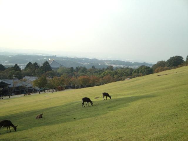 若草山近景.JPG