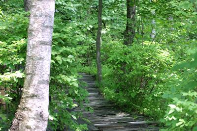 八ヶ岳倶楽部、うつくしい雑木林