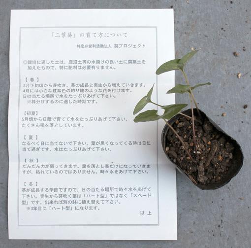 s20110811_aoi_2.JPG