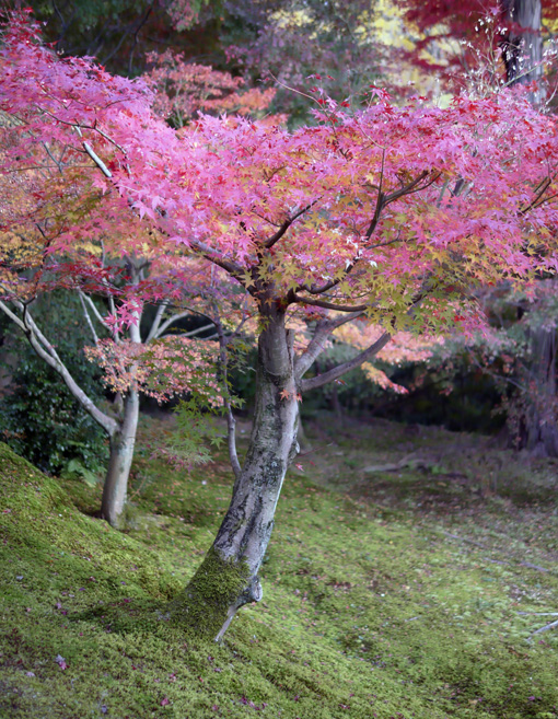 20111205_kyoto_2.jpg