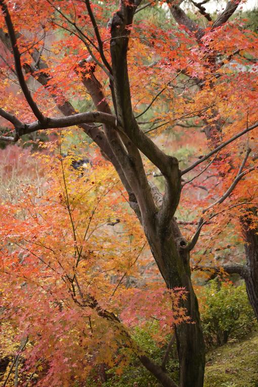 20111205_kyoto_3.jpg
