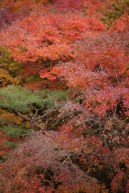 20111205_kyoto_4.jpg