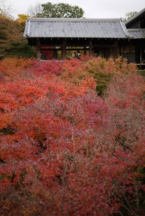 20111205_kyoto_5.jpg