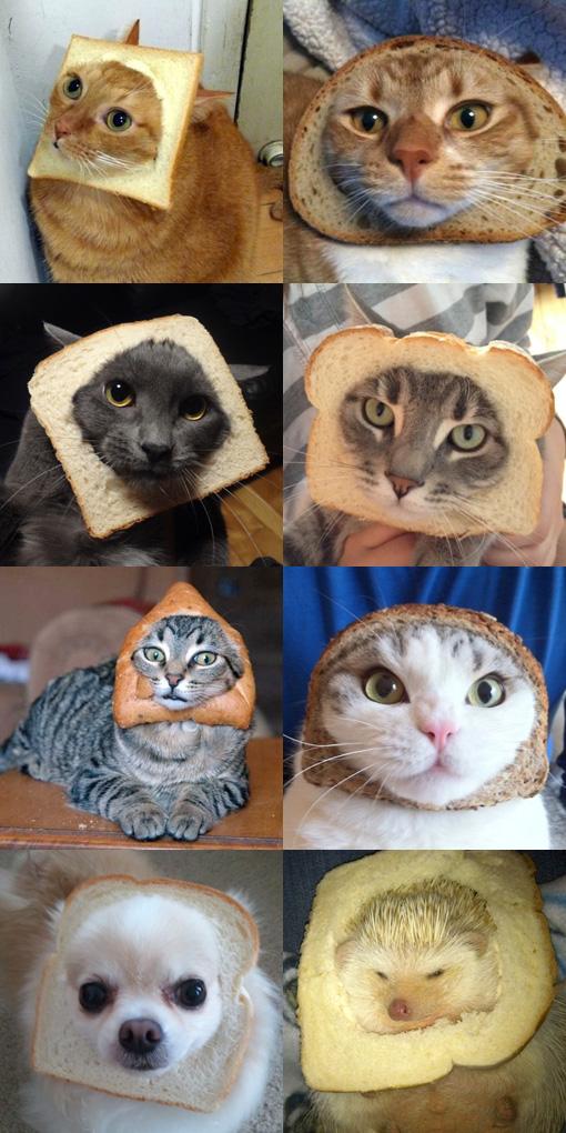 食パン猫サイトに、食パンハリネズミもいた。