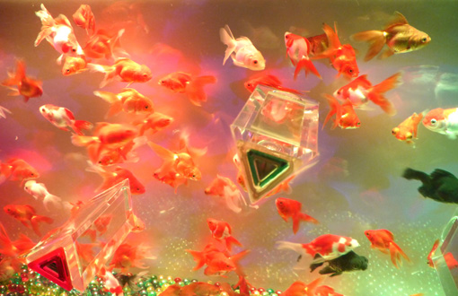 アートアクアリウム展 ナイトアクアリウム 江戸・金魚の涼