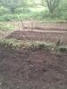 さらに開墾