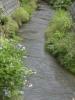 白禿 紫陽花と川